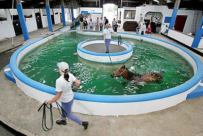 Animals Hydrotherapy Nj Aqua Hydrotherapy In The Oman
